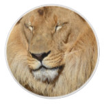 Adorable Lion Ceramic Knob