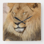 Adorable Lion Square Wall Clock
