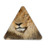 Adorable Lion Triangle Sticker