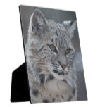 Amazing Bobcat Plaque