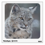 Amazing Bobcat Wall Sticker