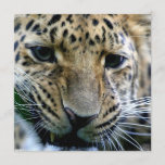 Amur Leopard Invitations