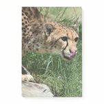 Beautiful Sleek Cheetah Cat Post-it Notes