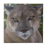Cougar Pounce Tile