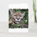 Cougar Predator Greeting Card