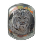 Creeping Bobcat Jelly Belly Candy Jar