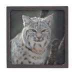 Creeping Bobcat Jewelry Box