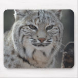 Creeping Bobcat Mouse Pad