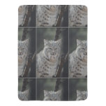 Creeping Bobcat Swaddle Blanket