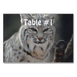 Creeping Bobcat Table Number