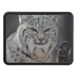 Creeping Bobcat Trailer Hitch Cover
