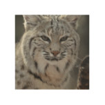 Creeping Bobcat Wood Print