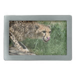 Gorgeous Sleek Cheetah Licking His Nose Belt Buckle