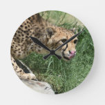 Gorgeous Sleek Cheetah Licking His Nose Round Clock