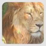 I Love Lions Stickers