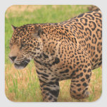 Jaguar  Stickers
