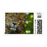 Leopard Photo Postage Stamp