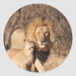 Lion and Lion Cub Sticker
