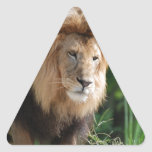 Prowling Lion Triangle Sticker