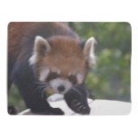 Prowling Red Panda Baby Blanket