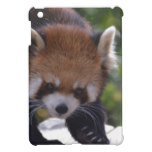 Prowling Red Panda Cover For The iPad Mini