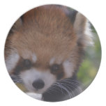 Prowling Red Panda Dinner Plate