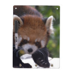 Prowling Red Panda Dry-Erase Board