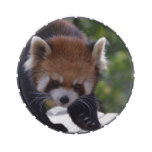 Prowling Red Panda Jelly Belly Candy Tin