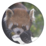Prowling Red Panda Melamine Plate