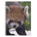 Prowling Red Panda Notebook