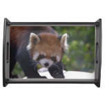Prowling Red Panda Serving Tray