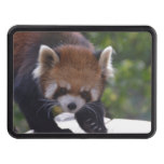 Prowling Red Panda Tow Hitch Cover