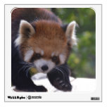 Prowling Red Panda Wall Decal