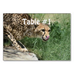 Sleek Cheetah Cat on a Rock Table Number
