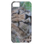 Sleepy Cheetah Cub Case For iPhone 5C