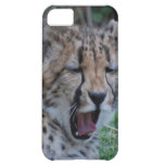 Sleepy Cheetah Cub Cover For iPhone 5C
