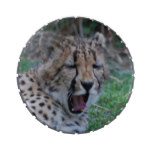 Sleepy Cheetah Cub Jelly Belly Tin
