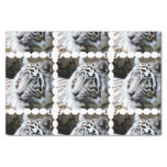 Sweet Faced White Tiger Tissue Paper