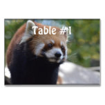 Sweet Red Panda Bear Card