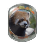 Sweet Red Panda Bear Glass Jar