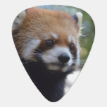 Sweet Red Panda Bear Guitar Pick