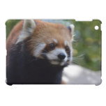 Sweet Red Panda Bear iPad Mini Cover