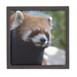 Sweet Red Panda Bear Jewelry Box