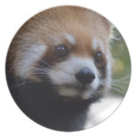 Sweet Red Panda Bear Melamine Plate