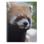 Sweet Red Panda Bear Notebook