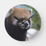 Sweet Red Panda Bear Round Clock