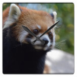 Sweet Red Panda Bear Square Wall Clock