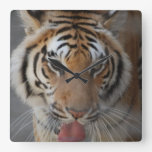 Tiger Kisses Wall Clock