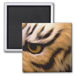 Tiger Photo Square Magnet